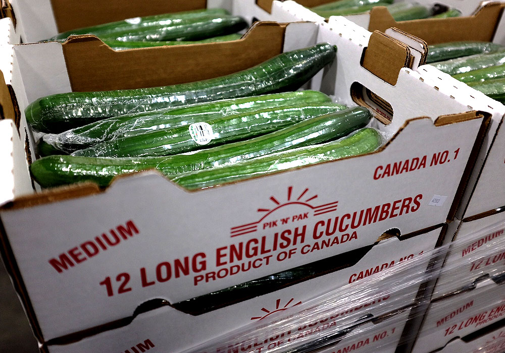Locally grown Alberta cucumbers