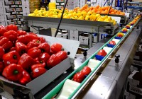 Peppers Being Processed at our West End Facility